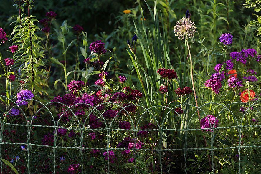 Floritor flores