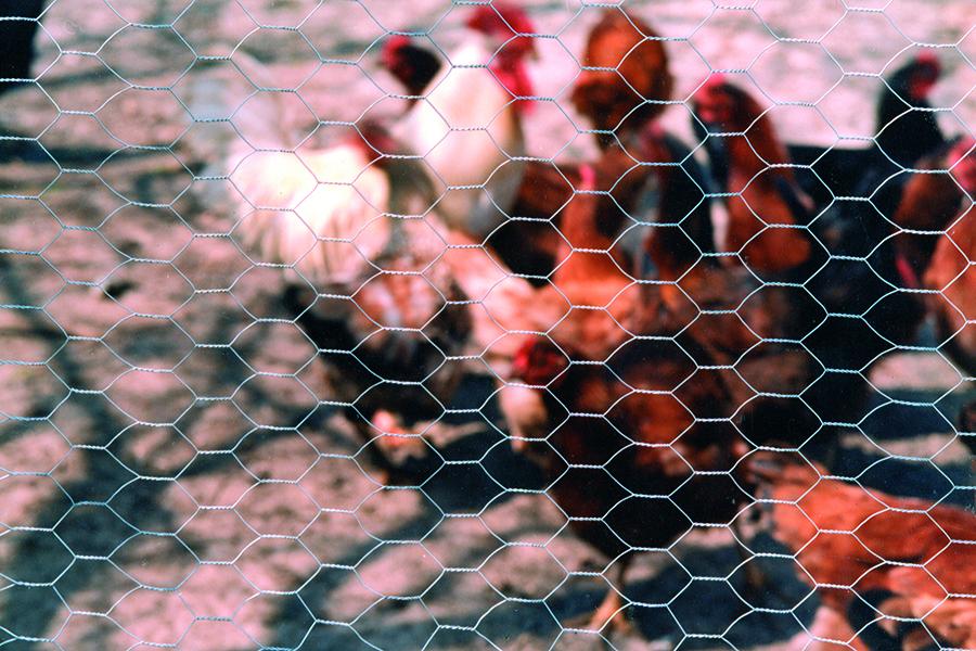 malla gallinera triple torsión